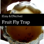 {Easy & Effective} Fruit Fly Trap