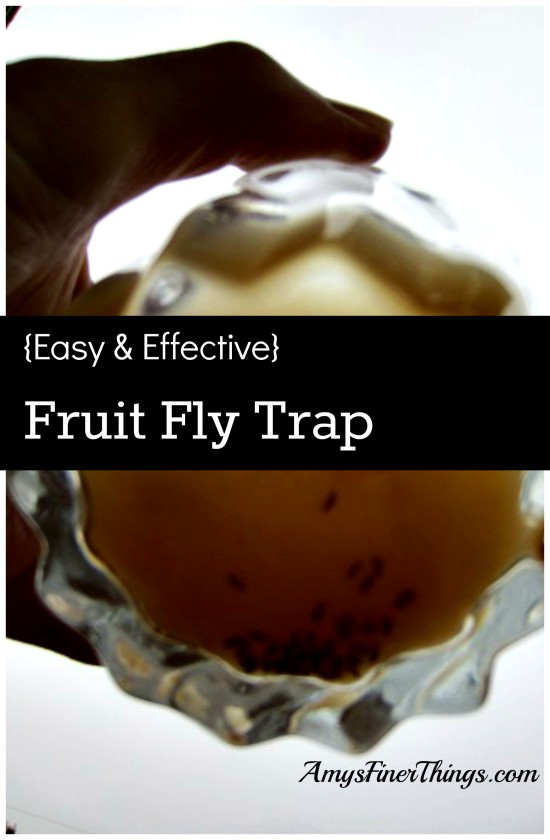 terro fruit fly trap easy healthy fruit recipes
