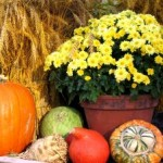 1229576_thanksgiving_arrangement_2