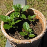 Gardening Updates from Around the Web