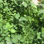 Pull the Weeds {Frugal Gardening  101}