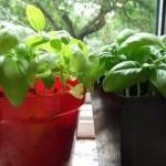 Frugal Gardening:  Mid-Summer Updates from Around the Web